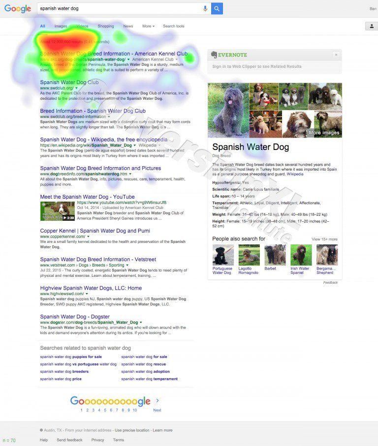 Google-Spanish-Water-Dog-1-768x907
